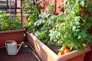 Orti sui balconi, giardinaggio in quarantena fa boom